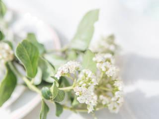 www.rocio-olmo.com Balkon, Veranda & TerrassePflanzen und Blumen