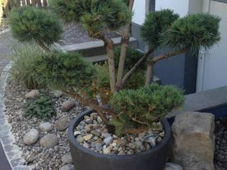 Gartenbonsai von Oswald Gärten Asiatisch