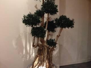 Ficus Ginseng stabilisé:  de style  par WallUP