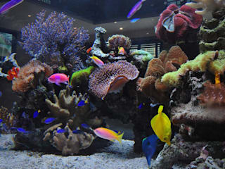 Footballer's Pad Aquarium モダンデザインの リビング の Aquarium Architecture モダン