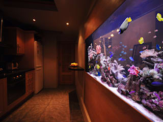 Salas de estilo tropical por Aquarium Architecture