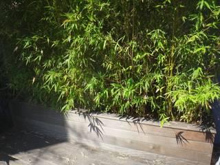 Nelumbo의  정원