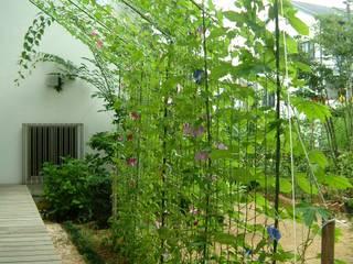 朝顔の日よけカーテン: ARKSTUDIO一級建築士事務所が手掛けた庭です。
