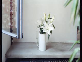 acquacalda HaushaltPflanzen und Zubehör