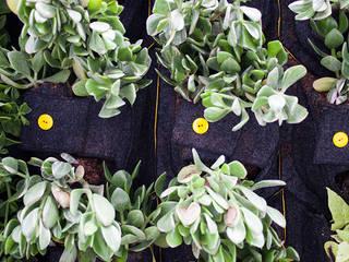 Green walls CONILLAS - exteriors Garden Accessories & decoration