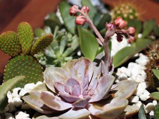 Tropical Garden Cactus de CLASS MANUFACTURING SA