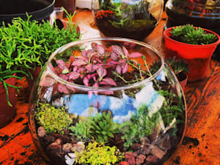 Terrariums by Ece Botanik