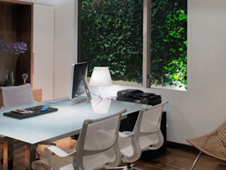 Rhyzoma - Arquitectura y Diseño HouseholdPet accessories