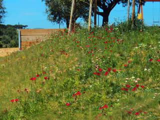 OpenGreen Rustic style garden