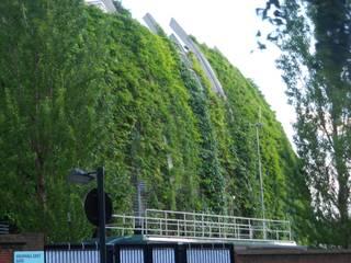Green walls Jardin moderne par Viridian Landscape Studio Moderne
