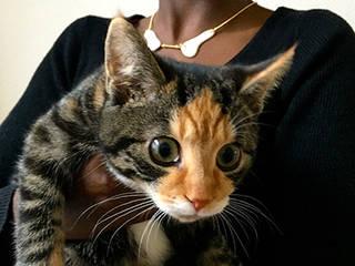 Met de kitten:   door Lisanne van Zanten