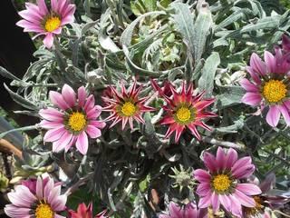 Piccolo giardino Giardino minimalista di Lucia Gitto Minimalista