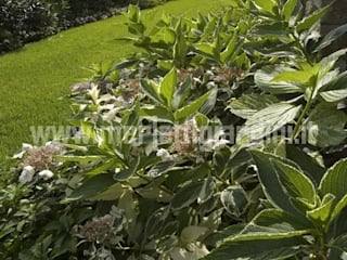 Giardino e complementi architettonici Merletti Garden Design Giardino
