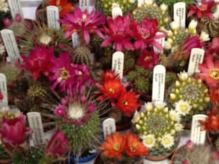 Cacti: classic  by Craig House Cacti, Classic