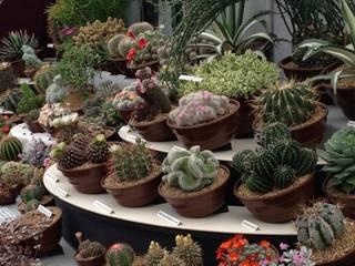 Cacti:  Garden  by Craig House Cacti