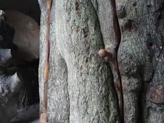Treehouse:   by Simon Archer Sculptor