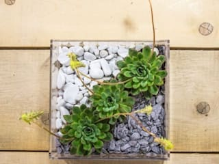 Niwabox - Giardini in scatola: Casa in stile  di Designtrasparente