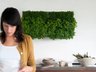 Projekty,  Zieleń wewnątrz zaprojektowane przez Greenbop