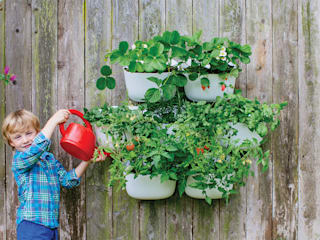NEW Living Wall Planter の Woolly Pocket