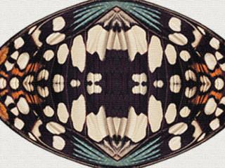 Lepi par Flora Sifflet