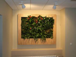 Фитокартины: Столовые комнаты в . Автор – Зеленый мир,