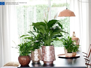 حديث  تنفيذ Pflanzenfreude.de , حداثي
