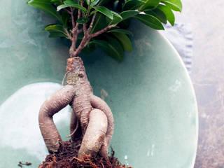 Pflanzenfreude.de의  실내 조경