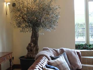 The Indoor Olive Tree Vanessa Rhodes Interiors Ruang Keluarga Gaya Eklektik