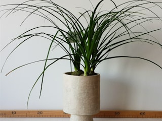 homify HouseholdPlants & accessories