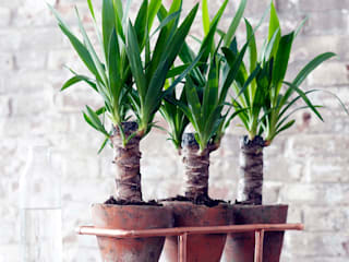 Pflanzenfreude.de 廚房配件與布織品