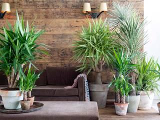 Living room by Pflanzenfreude.de