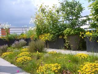 Dachterrassengestaltung München-Schwabing Blumen & Gärten Moderner Balkon, Veranda & Terrasse