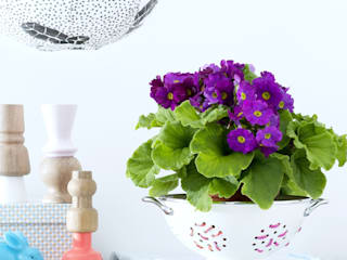 Pflanzenfreude.de 書房/辦公室配件與裝飾品