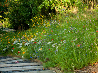 Wildflower Seed Meadow with Sleeper steps:  Garden by Katherine Roper Landscape & Garden Design