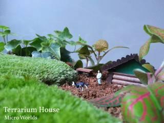 modern  by Terrarium House, Modern