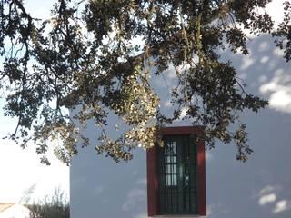EL ROBLEDO Jardines de estilo mediterráneo de LA BELLA SOMBRA PAISAJISMO Mediterráneo