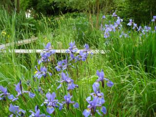 Iris-Sumpf:  Garten von ROJI Japanische Gärten