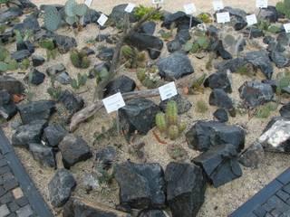Andreae Kakteenkulturen의  바위 정원