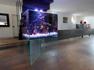 Floating Aquarium London Modern Living Room by Aquarium Architecture Modern