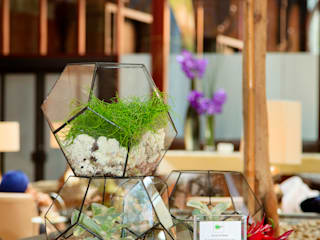 Terrarium Installations The Urban Botanist Modernes Messe Design