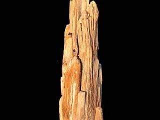 Driftwood floor lamp:   by Julia's Driftwood