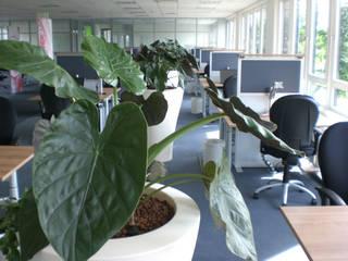 Moderne Bürobegrünung von BAUMHAUS Moderne Bürogebäude von BAUMHAUS GmbH Raumbegrünung Pflanzenpflege Modern