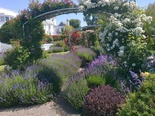 Lavender and roses Roger Webster Garden Design Jardines de estilo moderno