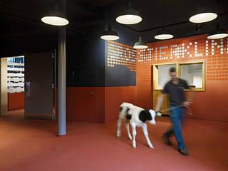 Umbau/Sanierung des Empfangs und Demonstrationshörsaals der Grosstierklinik an der Universität Zürich:  Schulen von Bureau Hindermann GmbH