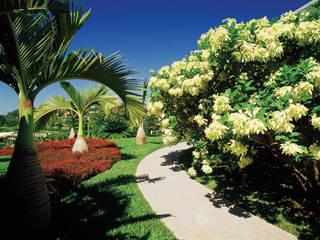 Jardines de estilo tropical de Marcelo Novaes Paisagismo Tropical