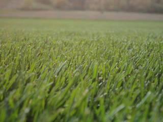 bakış uluslararası çiçekçilik hazır rulo çim üretimi ve peyzaj – RULO ÇİM: endüstriyel tarz tarz Bahçe