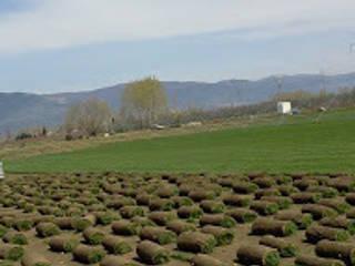 bakış uluslararası çiçekçilik hazır rulo çim üretimi ve peyzaj – RULO ÇİM HASAT: endüstriyel tarz tarz Bahçe