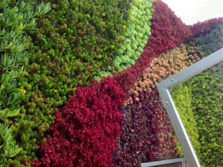 Muros Verdes - Jardines Verticales ENVERDE Balcones y terrazas modernos