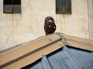 Dawn of the Creatures - isolation part 1, 2011: propandas의 촌사람 같은 ,러스틱 (Rustic)