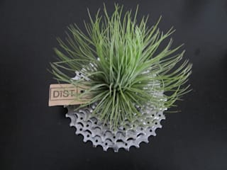 Dïst Airplants, luchtplanten, luftplanzen Industriële serres van Dïst Dutch Design Industrieel